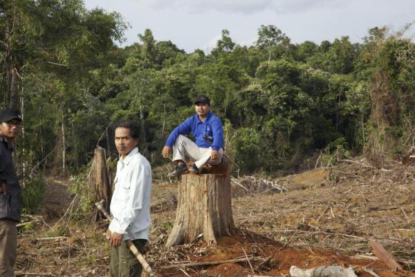 Petrus Asuy (foreground) and his son Masrani on an Ulin stump on the Dayak Benuaq's customary land (c) EIA/Tom Johnson
