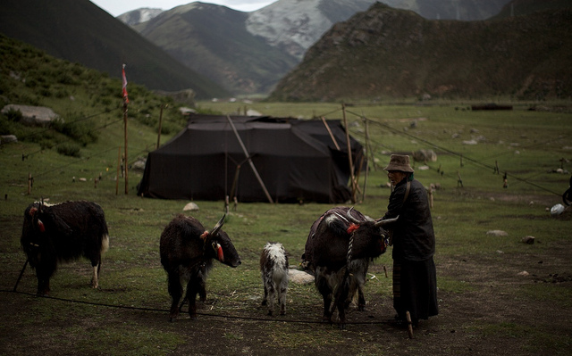Inconvenient Truths De Bunking Chinas Plan To Settle Nomadic