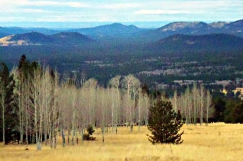Near the Navajo Nation on the San Francisco peaks in Flagstaff
