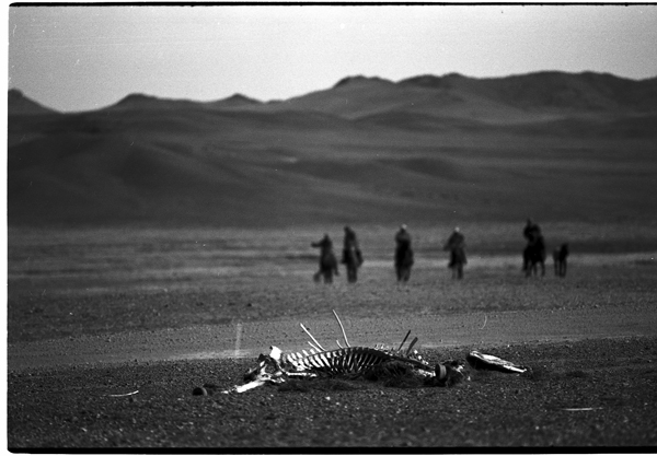 Life for herders on the steppe is hard enough without the toxic pollution and land-grabbing of foreign mining corporations -- causing epidemics of diseases and loss of entire herds. Photo c. keith harmon snow, 2008.