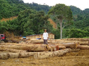 Sarawak's logs are a questionable product.
