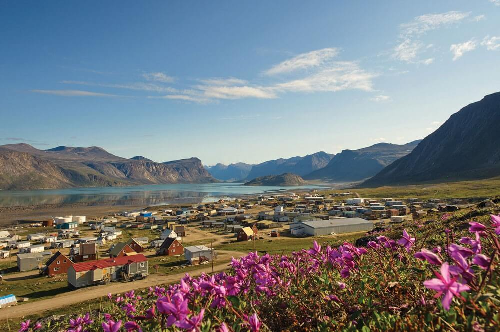 Pangnirtung, Nunavut. Purple saxifrage is Nunavut's official flower and can be seen from a distance on the tundra in summer.
