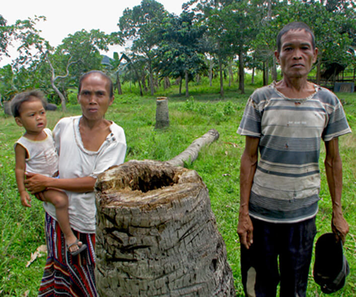 Indigenous Pala'wan losing out their coconuts because of oil palm plantations, Municipality of Espanola