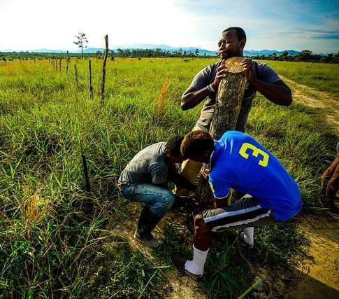 Garifuna youth brigade members remove a fence post in the area planted by narco invaders of the land prior to 2012 land recovery (Photo: Steve Pavey)