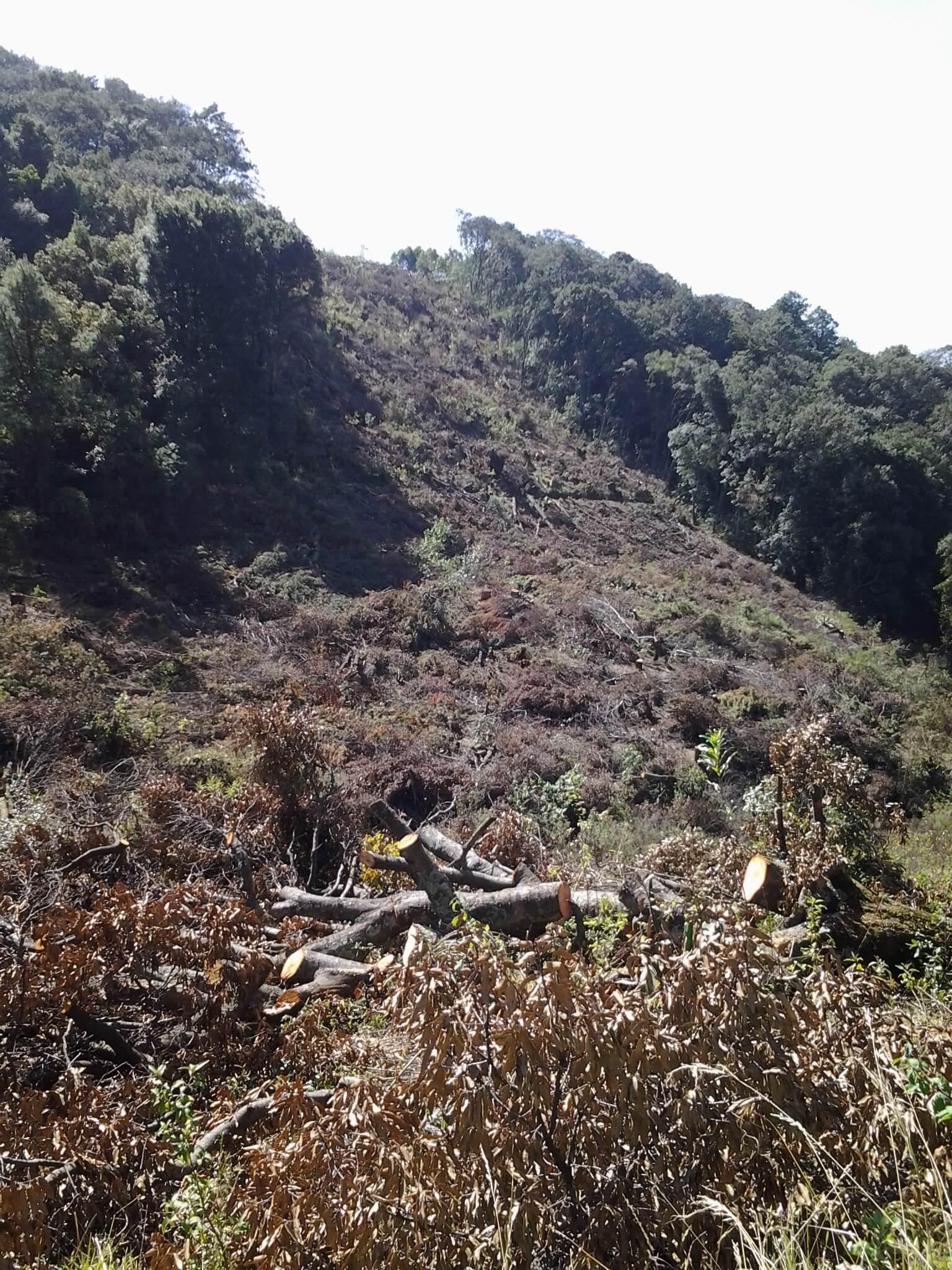 Forest destruction, SFX (Heidi Bruce)