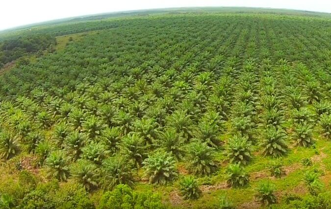 palm oil stalemate who is responsible essay The bird of paradise (floating peril  that the people who put him into office and who are responsible to  probably an old-fashioned oil tanker.