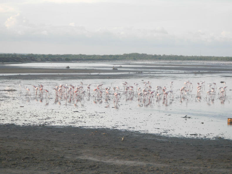 Flamingos at Saadani National Park in Tanzania