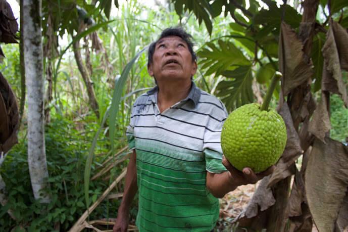 Former toshao Michael Simon holding a bread fruit (Photo: Neil Anthony Giardino)
