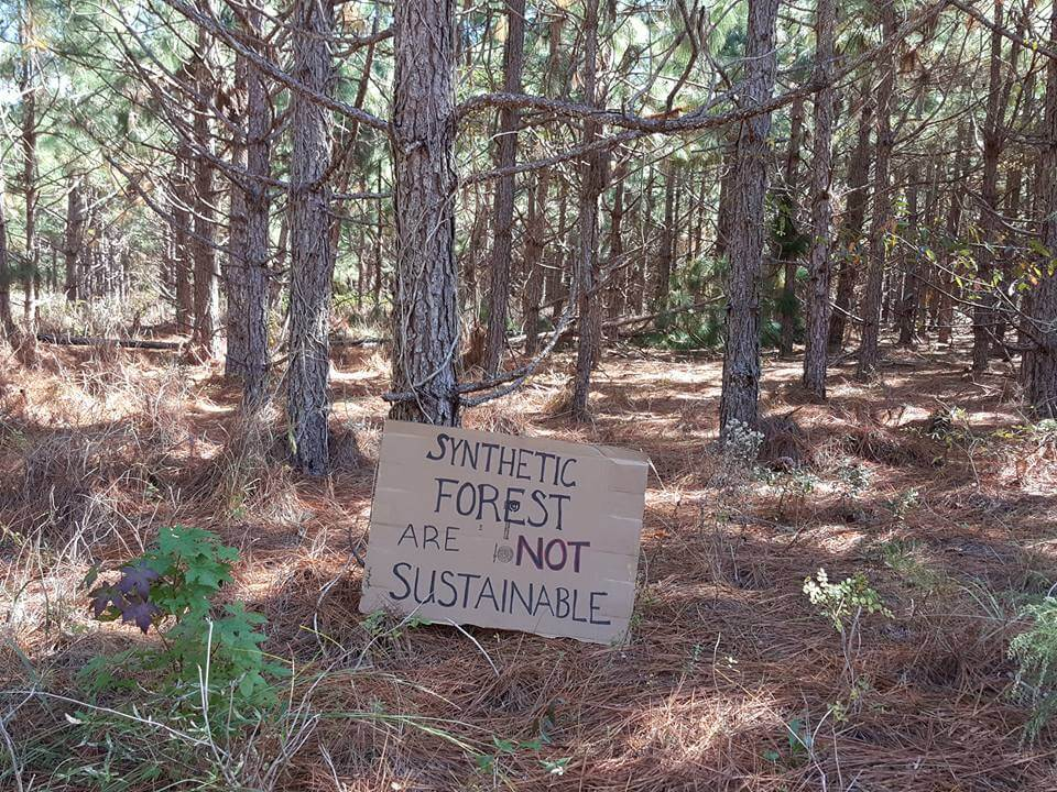 , Genetically Engineered Trees Condemned in Myrtle Beach