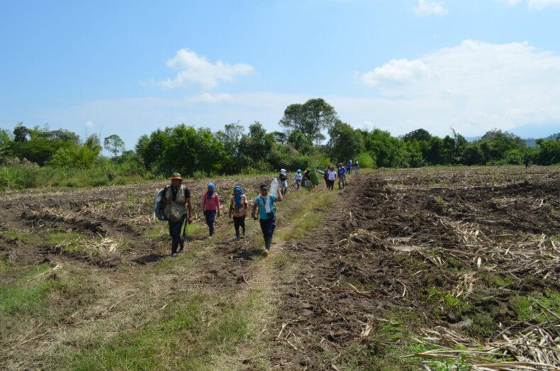 Nasa activists replanting the sugar plantation of La Emperatriz, Caloto, Cauca. Photo: Robin Llewellyn