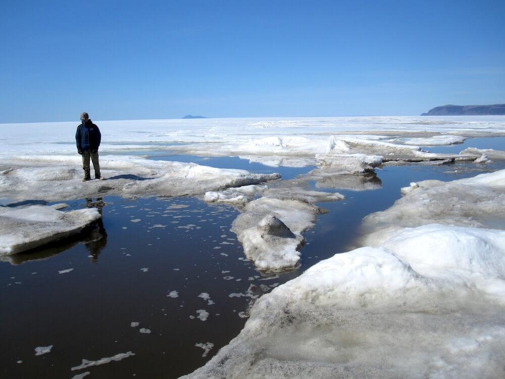 El hielo marino del Estrecho de Bering, 2010