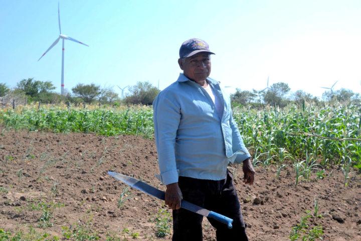 Zapotec farmer