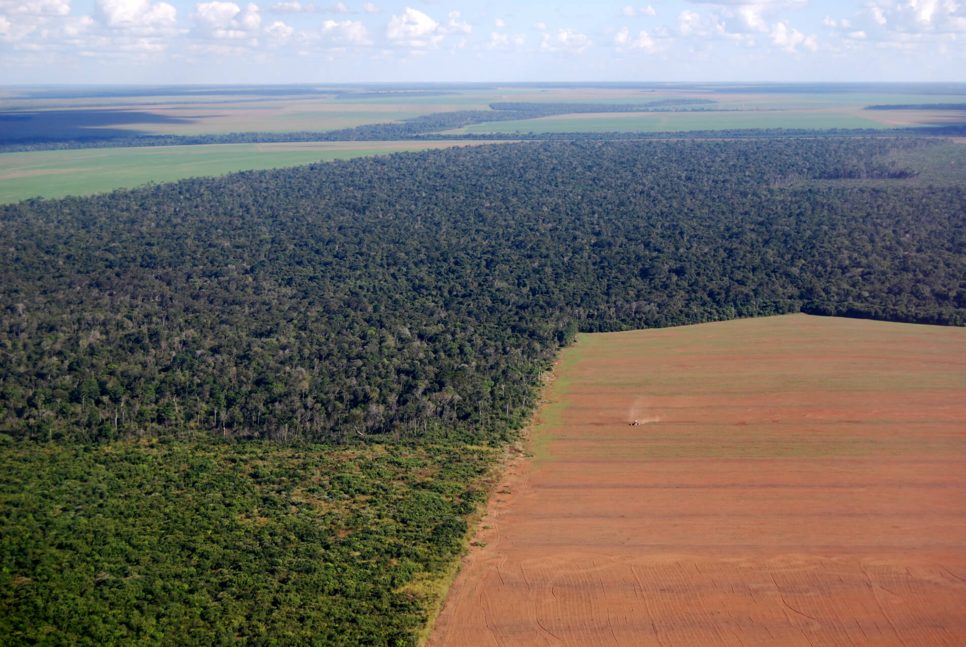 Monocultures of crops such as soy in the Amazon are causing deforestation and environmental degradation.